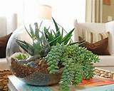 best indoor garden ideas with modern indoor gardening design ideas to