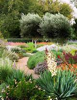 low water plantings - home and garden | Gardens | Pinterest