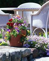 container gardening early spring container gardens ideas