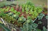 vegetable garden landscape ideas grout house