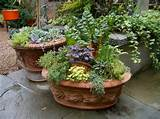 container gardening patio container gardening ideas ideas