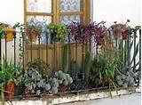 succulent balcony rustic balcony decor garden jpg