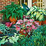 judys cottage garden container gardens container plants pinterest