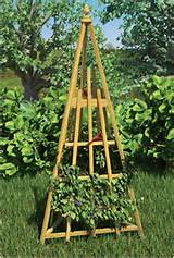 garden trellis and bird feeder