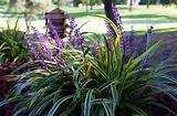 plant for shade | Liriope - (also called Monkey Grass or Lily Turf ...