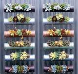 Insanely Creative Vertical Garden Ideas (1)