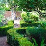 southern california gardening viva la shrub