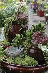 ... Gardens Ideas, Succulents Cactus, Succulent, Container Garden