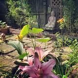 garden #garden #zen #Buddha | garden ideas | Pinterest
