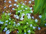 where my cousin lost his life as a memorial forget me knot flowers