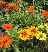 Mountain Gardening: Colorful Flowers for Fall Planting