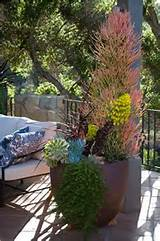 succulent container garden ideas Car Tuning