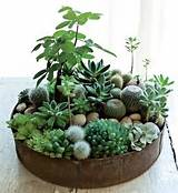 here are some astonishingly smart mini indoor garden ideas for you to