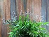 ... Christmas Gift Idea, Plant Stick, Garden Decoration, Personalized Gift