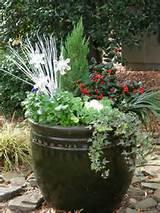 Christmas container garden | Garden Ideas | Pinterest
