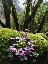 Low-Maintenance Outdoors: Woodland Garden | outdoortheme.com