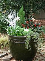 Christmas container garden | Garden Ideas | Pinterest