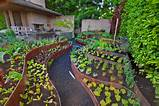 how to turn a steep backyard into a terraced garden designrulz com