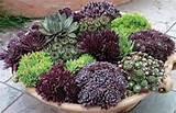 shallow succulent dish garden succulent plants pinterest