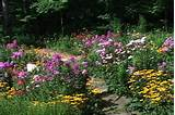 wildflower garden designsperennial wildflower garden design shade