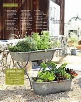 salad garden gardening pinterest