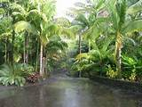 tropical landscape tropical landscaping with emphasis on palm