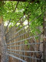 rustic arbor trellis garden ideas pinterest