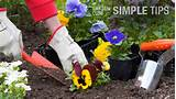 plant early spring flowers like pansies and snapdragons garden club