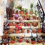 succulents terrarium mini cactus gardens pinterest