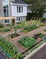 raised vegetable garden front yards vegetables garden raised garden