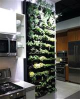 Indoor Herb Garden Ideas - 3 Girls Holistic