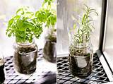 Indoor herb garden.... In the mason jars that I already own. Time to ...