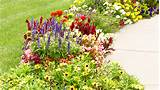 this winding walkway is lined with long blooming annuals that will