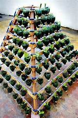 Vertical vegetable garden from plastic bottles. It allows plants to ...