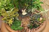 Container Ideas: Miniature Succulent Fairy Gardens - Birds and Blooms