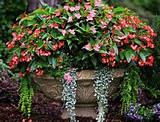 container gardening best plants for shade container gardens ideas
