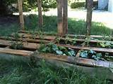 10 pallet vegetable garden ideas pallets designs
