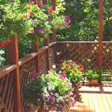 deck containers gardening ideas pinterest