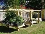 tips on vegetable garden ideas