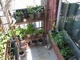 balcony garden by sniffles