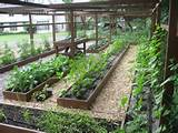 Small Backyard Vegetable Garden Ideas | Vegitable Gardening | Pintere ...