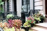 coleus and caladium pots garden ideas pinterest