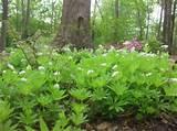 woodland garden | garden ideas | Pinterest