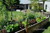 raised vegetable garden bed garden ideas pinterest