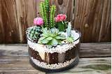 DIY Cactus Garden Idea | Home Design, Garden & Architecture Blog ...
