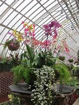 container gardening ideas my photography pinterest