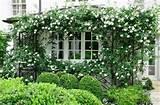 Ideas, P Allen Smith, Kitchens Windows, Gardens Exterior, Gardens ...