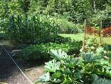 growing a vegetable garden_ garden ideas.PNG