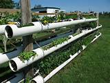 DIY Hydroponic Garden Tower Using PVC Pipes-2