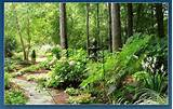 landscaping ideas woodland mount pleasant landscape design garden ...